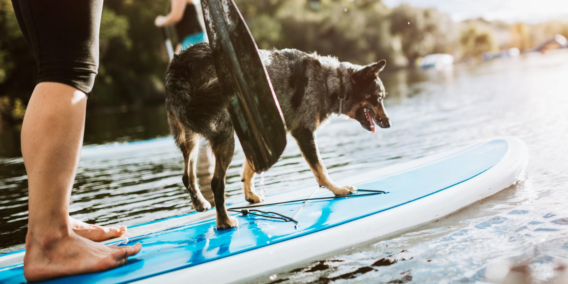 Dog-friendly SUP