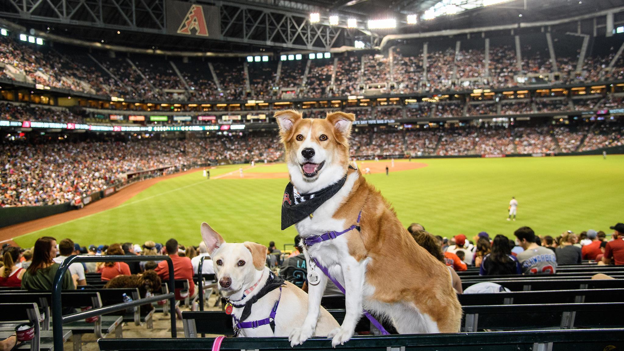 Dog-friendly MLB