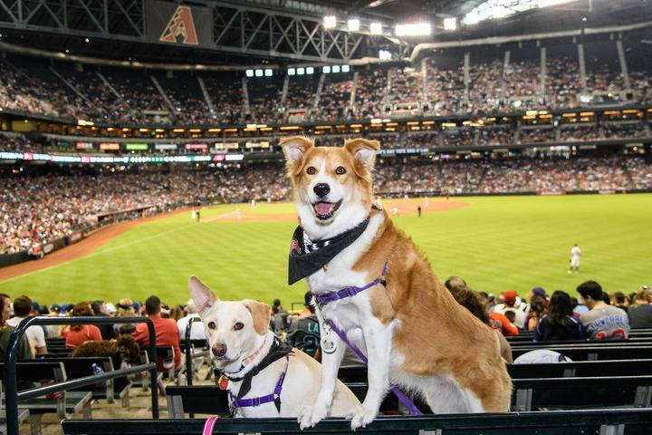 Dog-friendly MLB