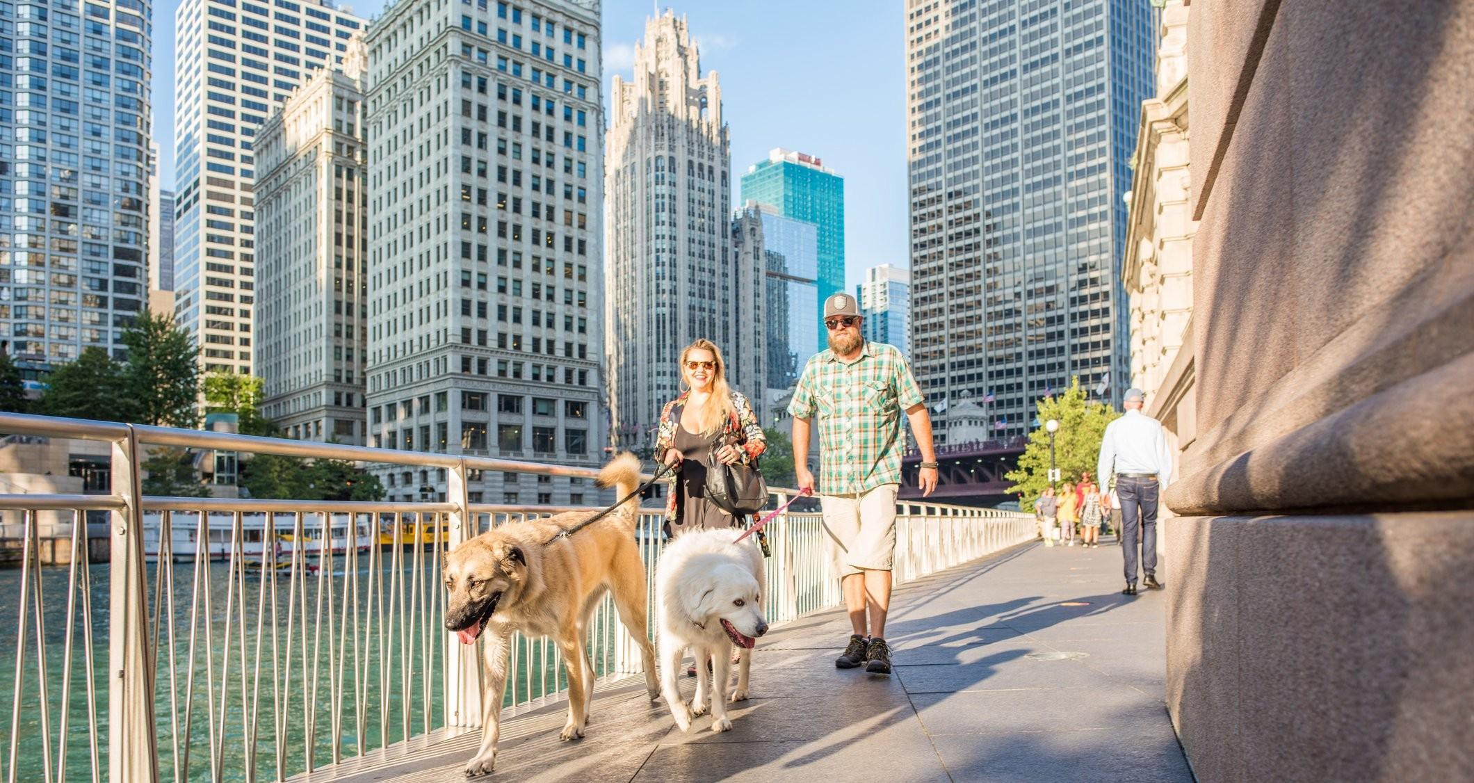 Spend a weekend in dog-friendly Chicago!