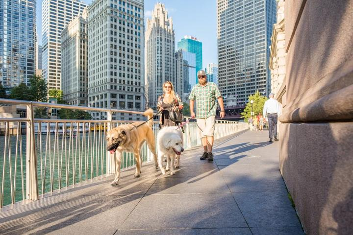 A weekend itinerary to dog-friendly Chicago.