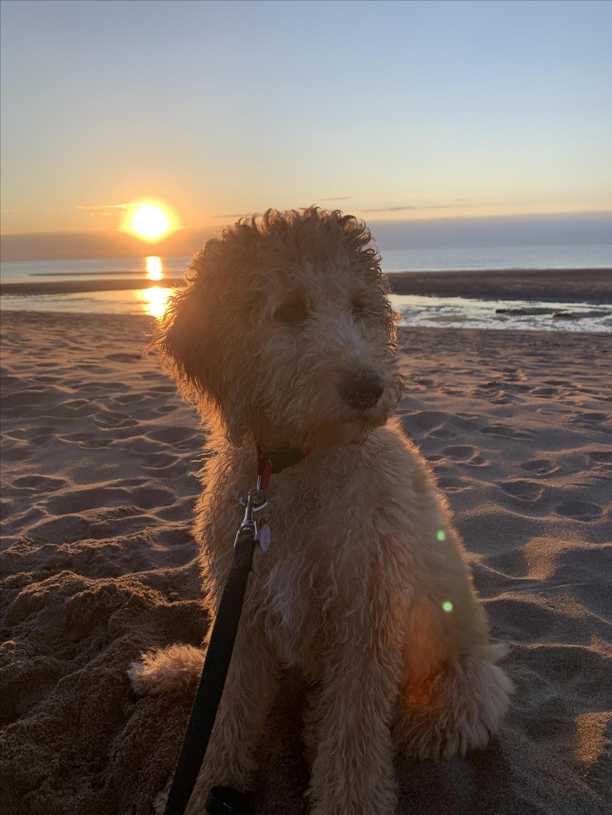 Stella At Sandy Beach In Capelé NB