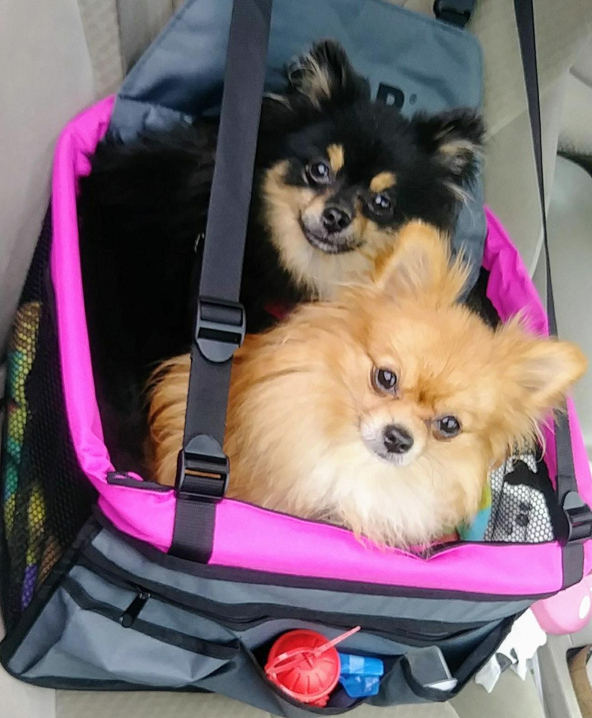 Sasha & Lola