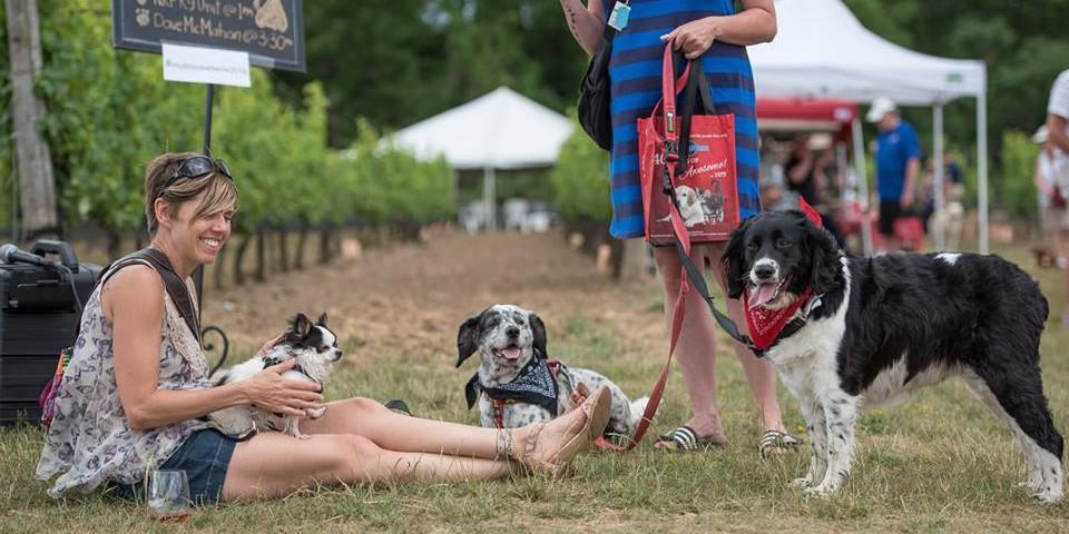 Dog friendly events in July 2019.