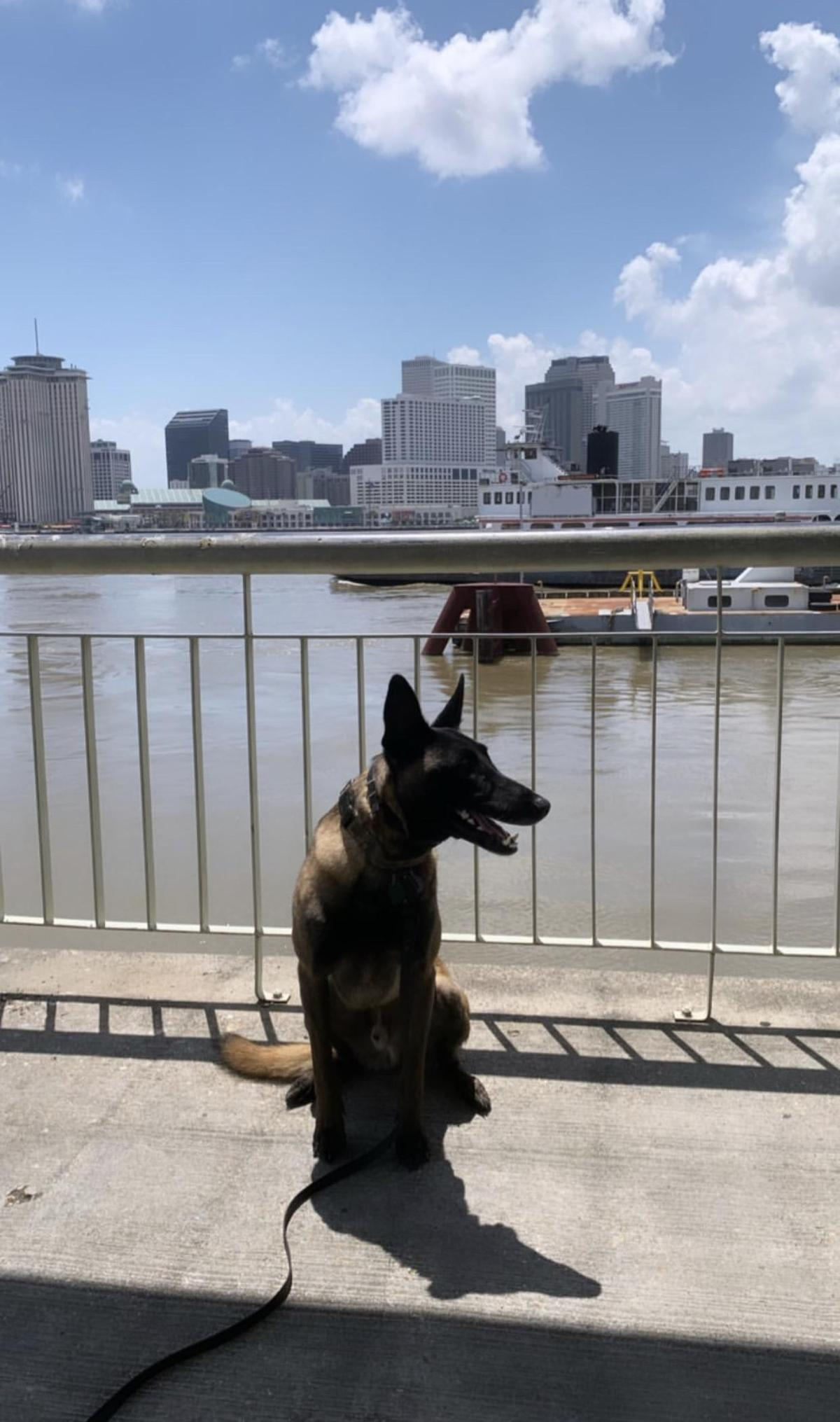 A Dog Waits for the Algiers Ferry in Dog-Friendly New Orleans.