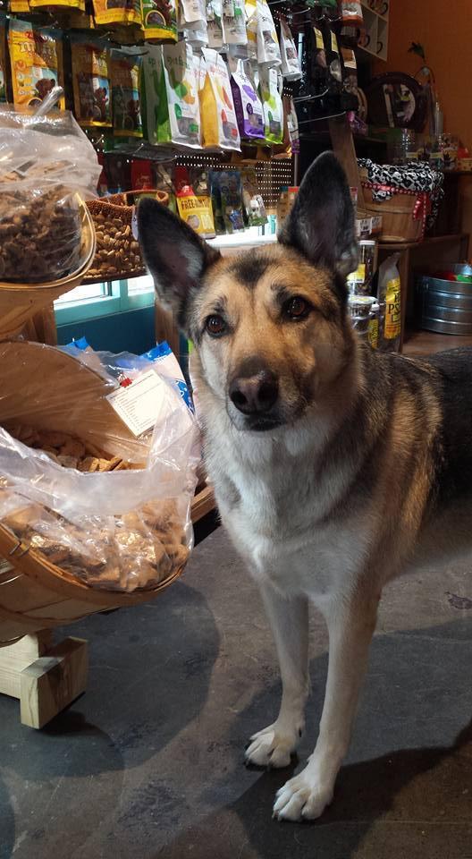 Fido will love the treats at Pooch Pantry, a pet bakery in Santa Fe.