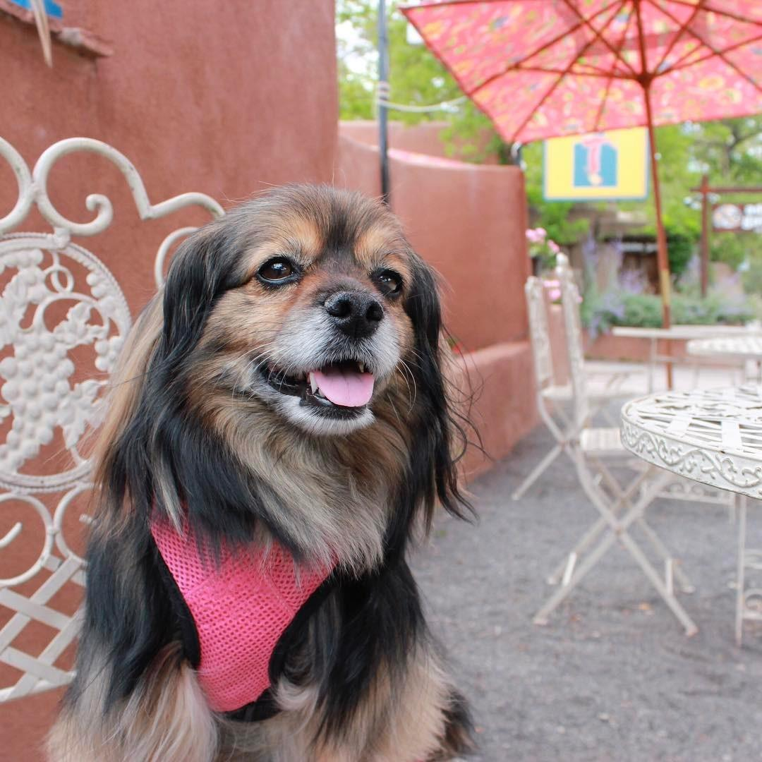 Cafe des Artistes is a dog-friendly cafe in the Santa Fe arts district.