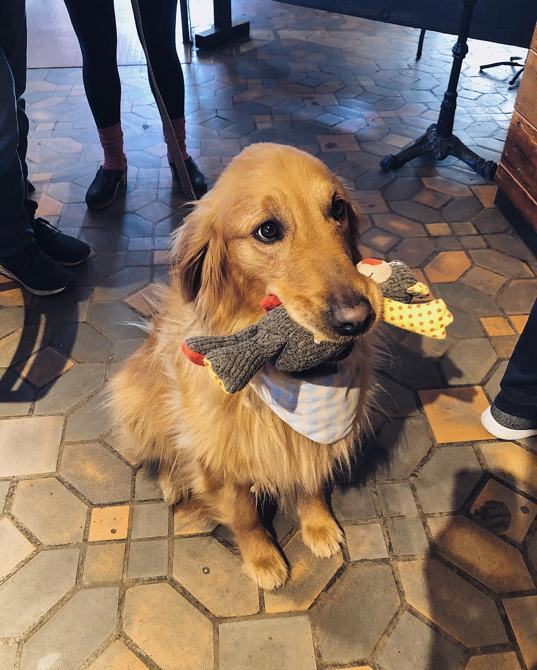 Enjoy coffee with your canine at this dog-friendly coffee shop and bookstore.