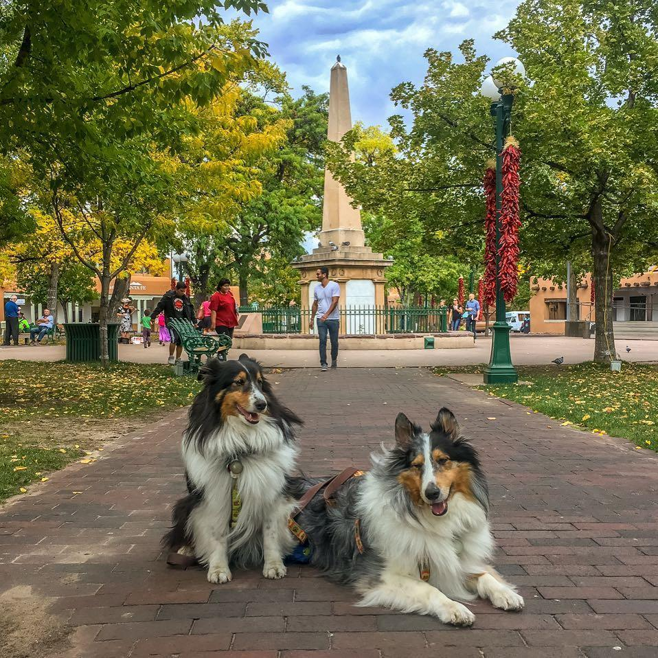 Historic Walks of Santa Fe offers dog-friendly tours of the city.