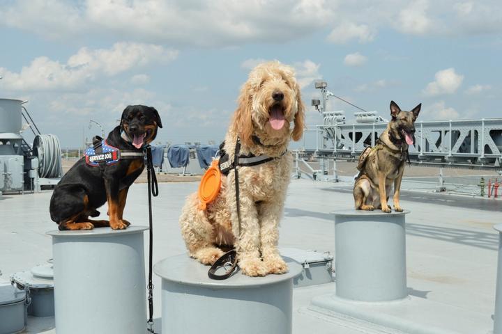 Pet Friendly USS Alabama Battleship Memorial Park