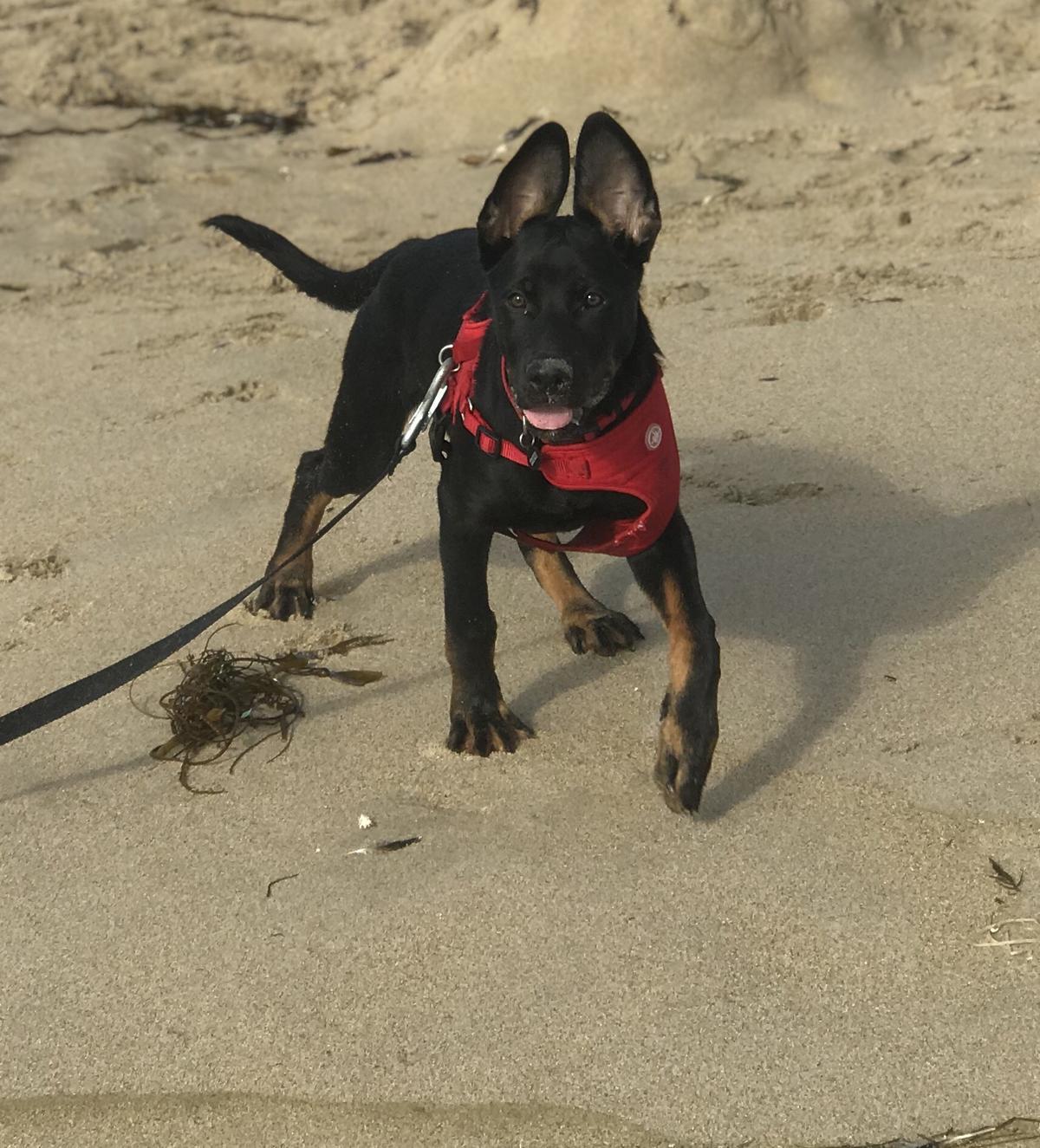 Jango's First Trip To The Beach