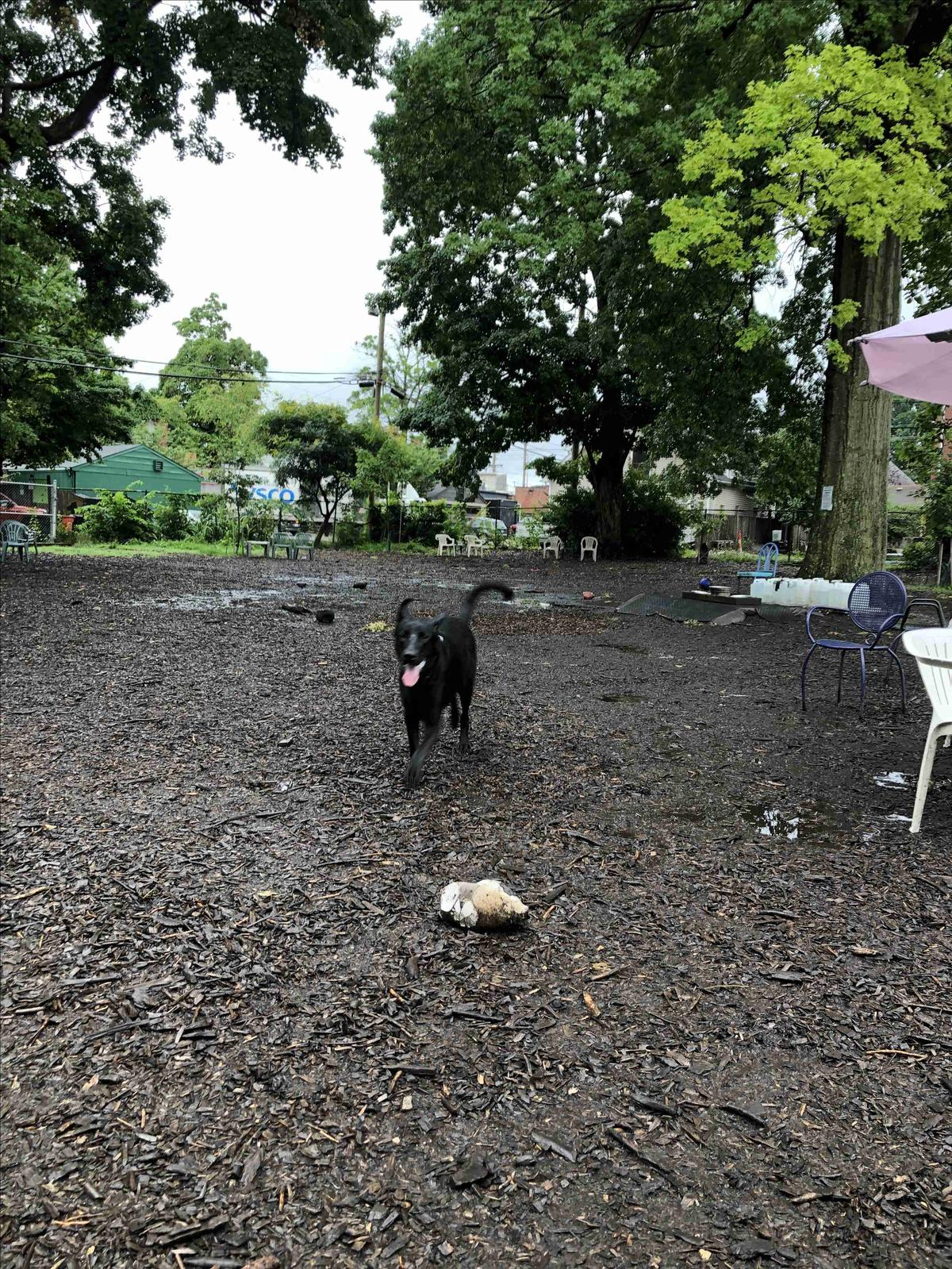 Boomer Playing In Muddy Park
