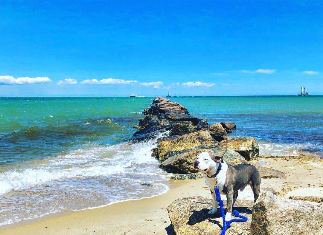 Dog-friendly Nantucket beach