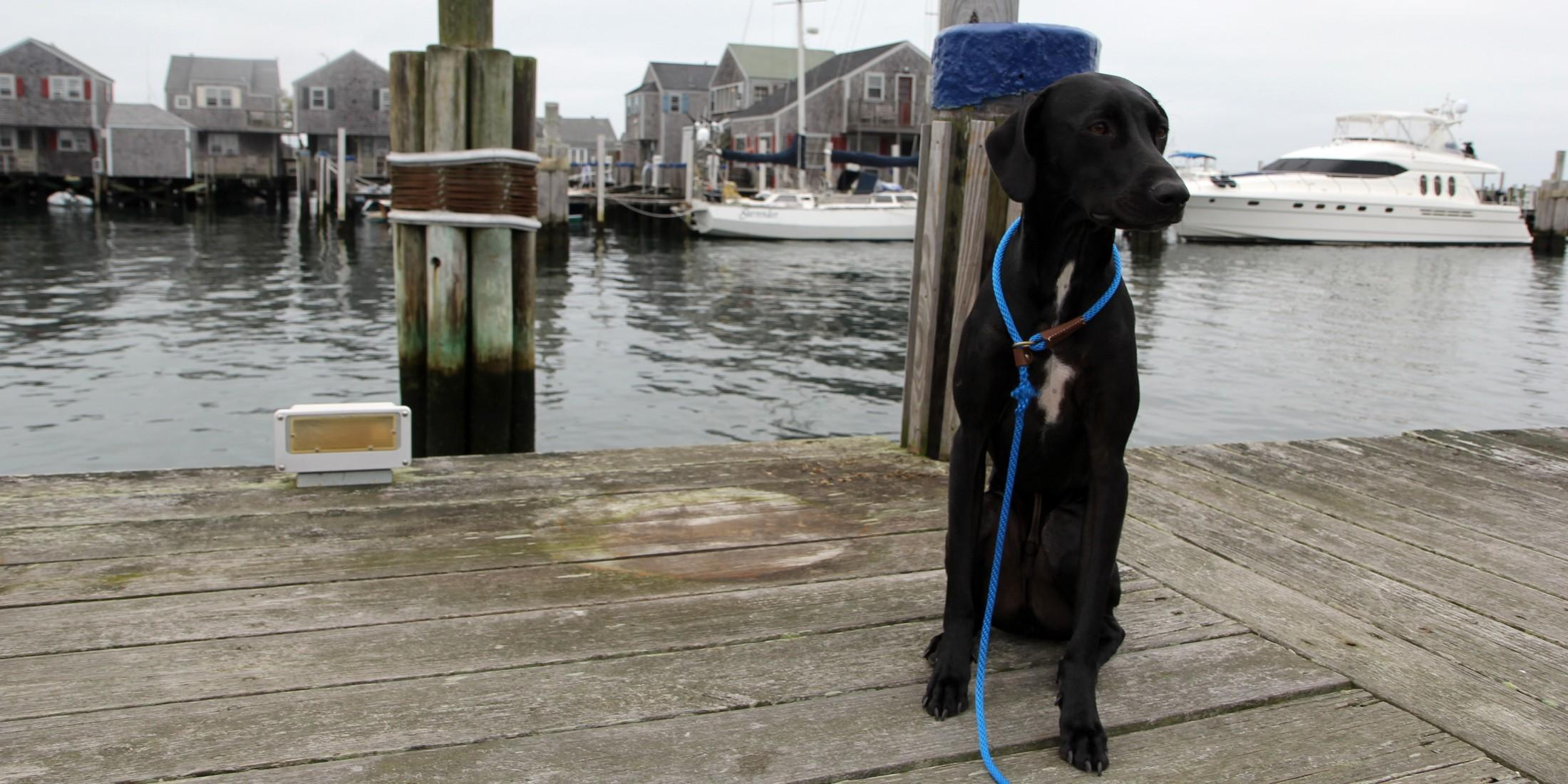 Dog-friendly Nantucket