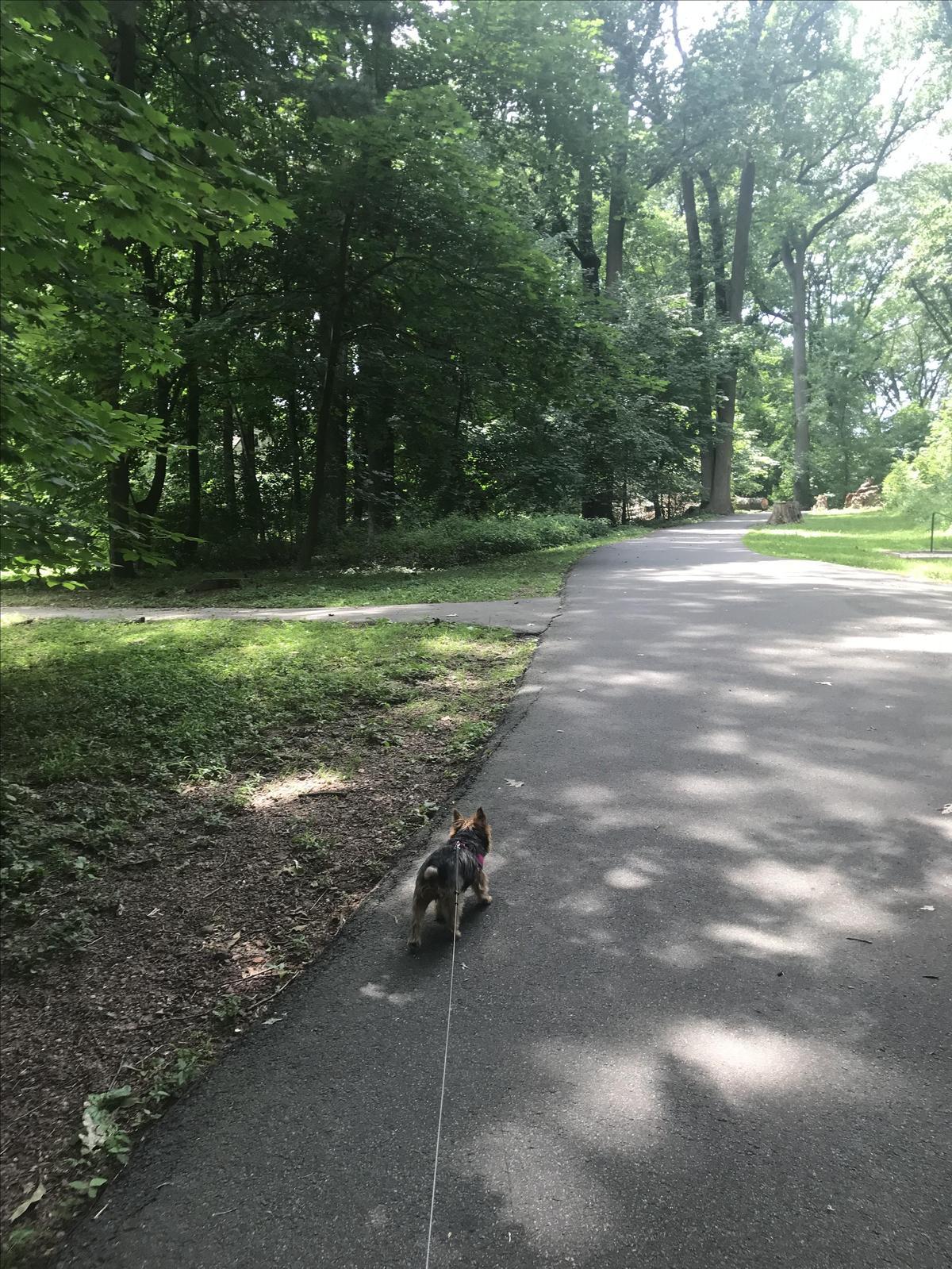Bella In The Park