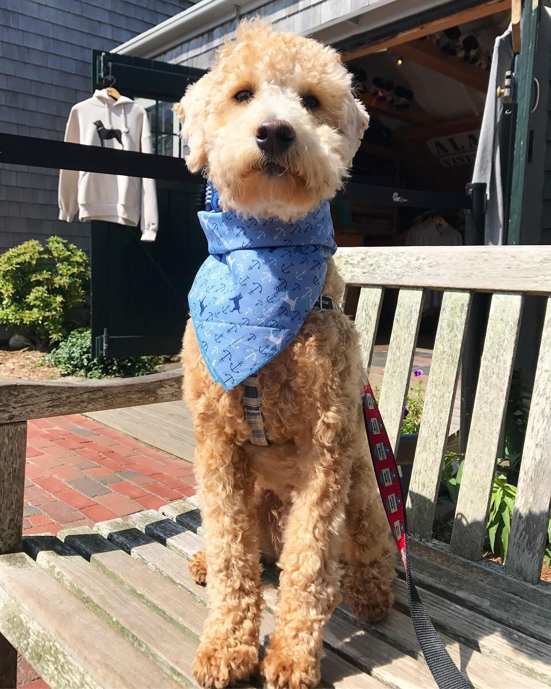 Nantucket shopping with dogs