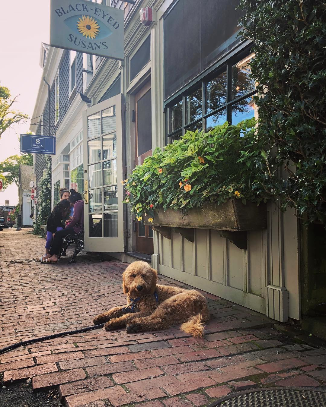 Black-Eyed Susan's in Nantucket is dog friendly
