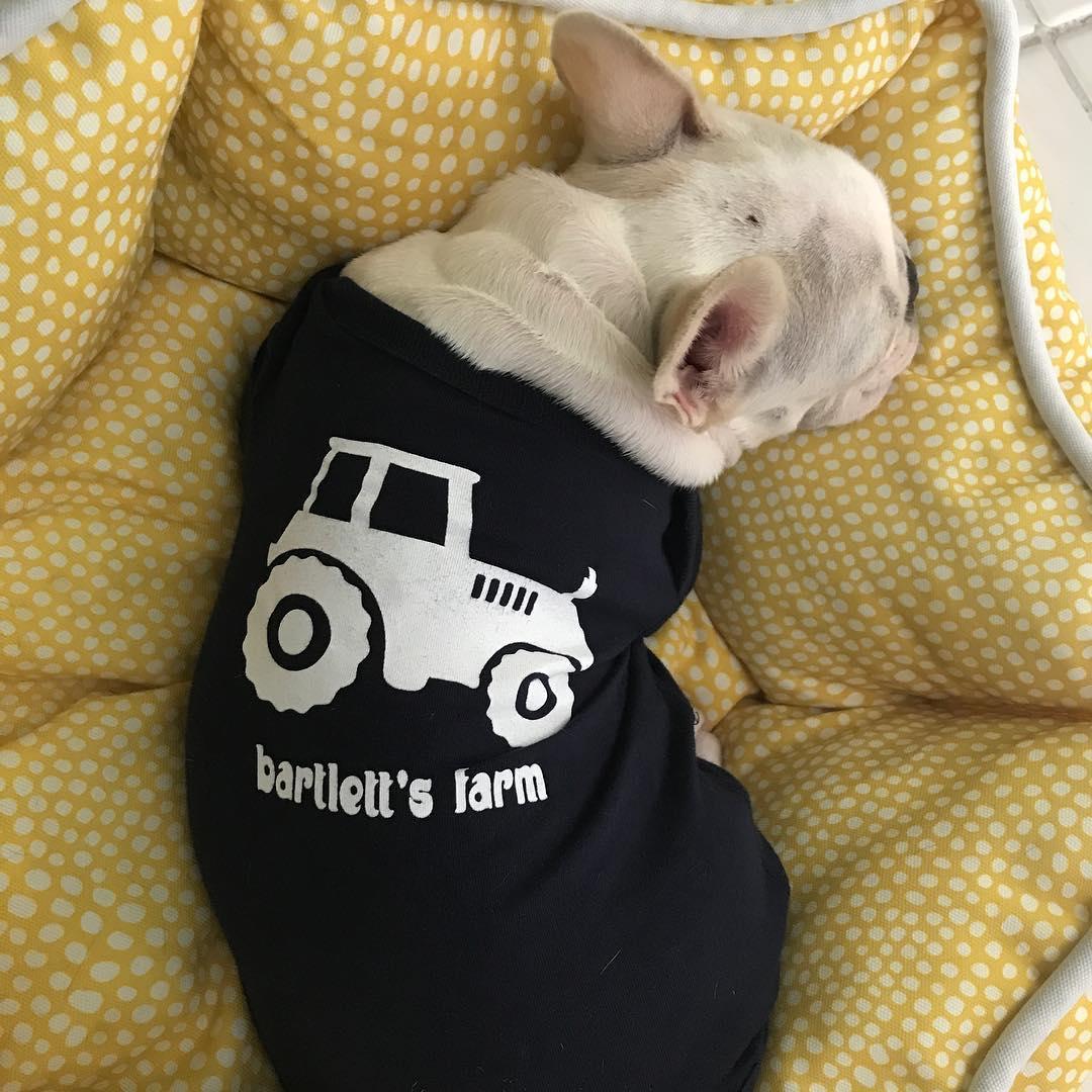 Dog-friendly activities in Nantucket