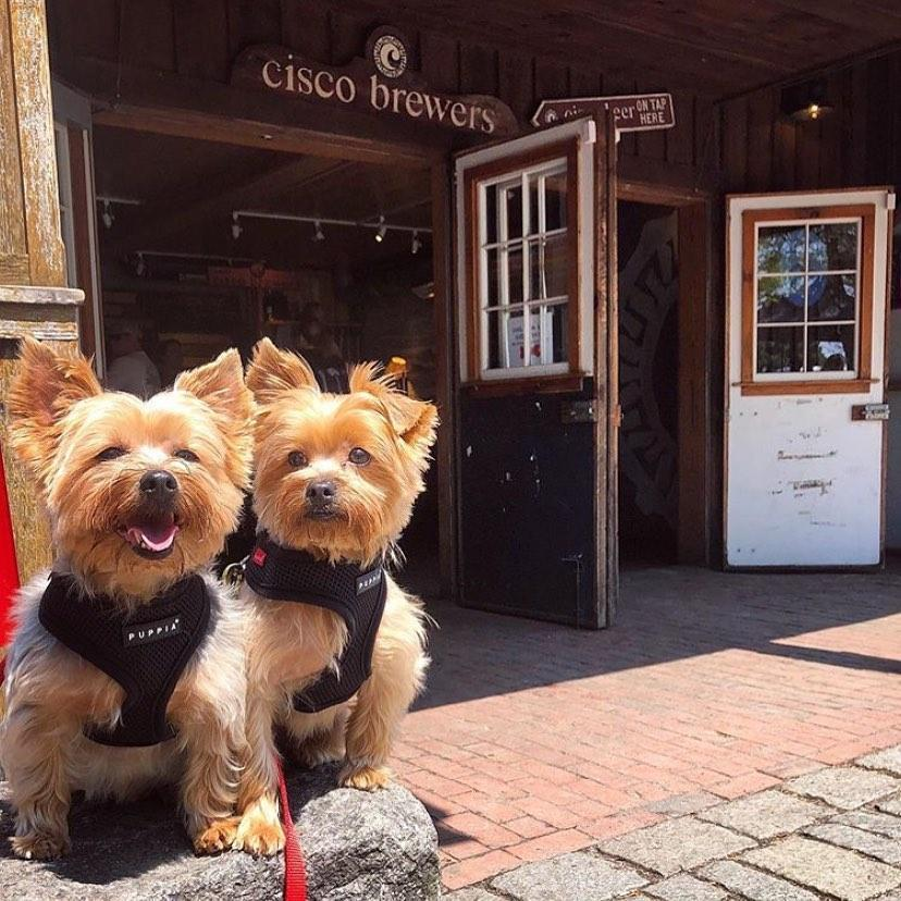 pet-friendly Nantucket brewery