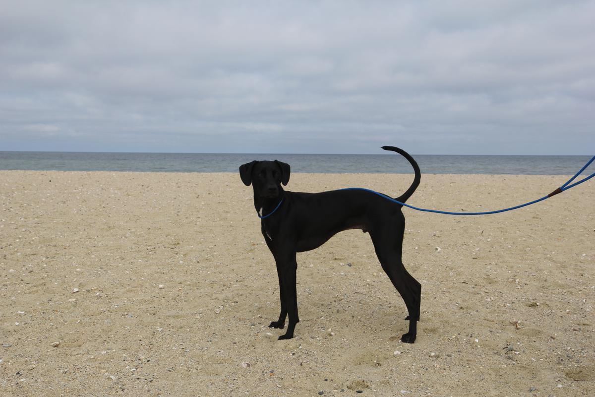 Dog-friendly Nantucket beaches