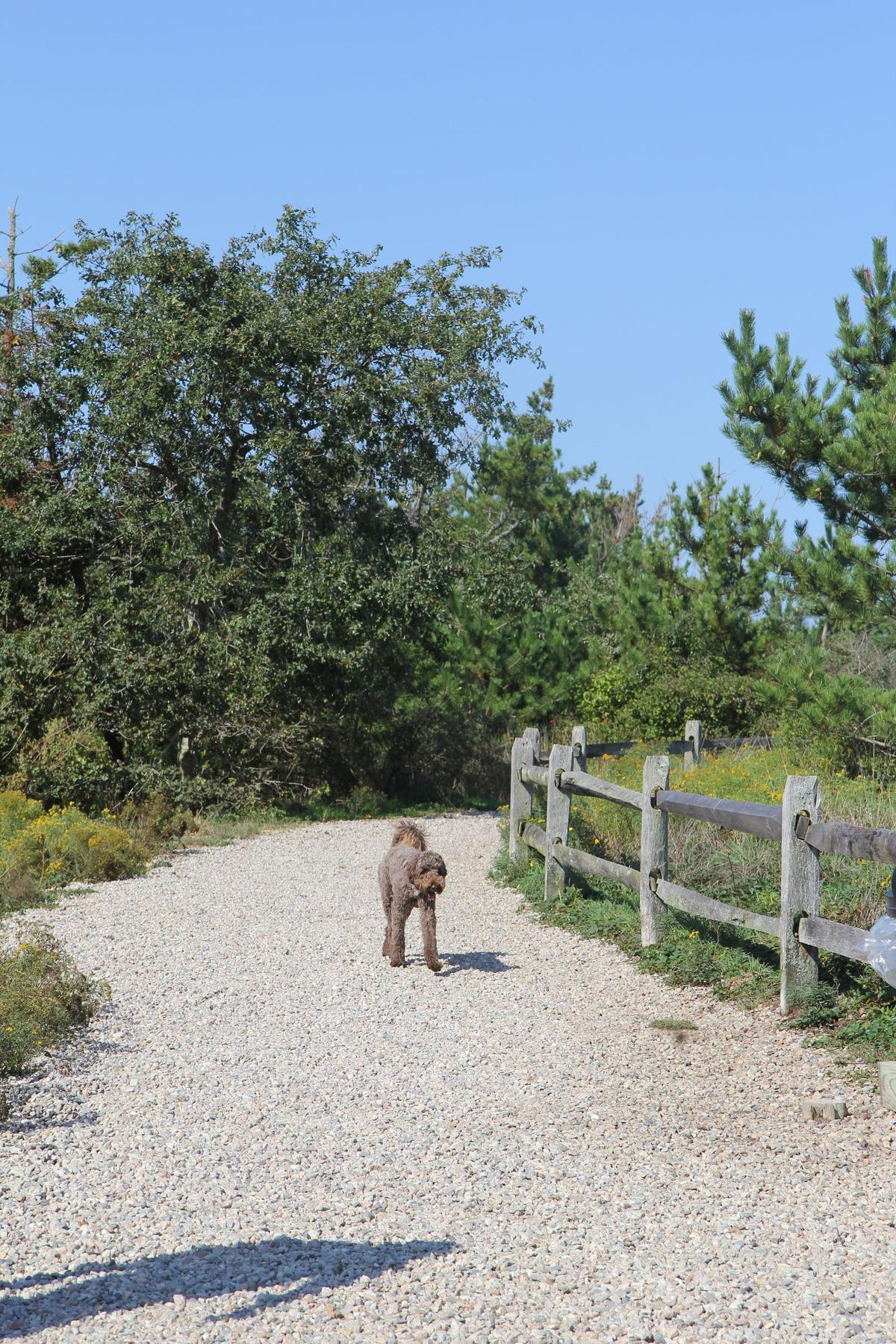 Tupancy Links allows dogs