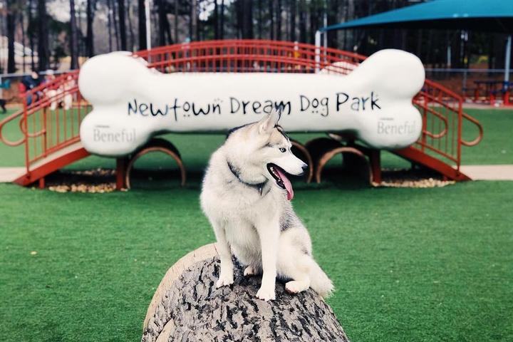 Newtown Dream Dog Park was the first winner of Beneful's Dream Dog Park Campaign.