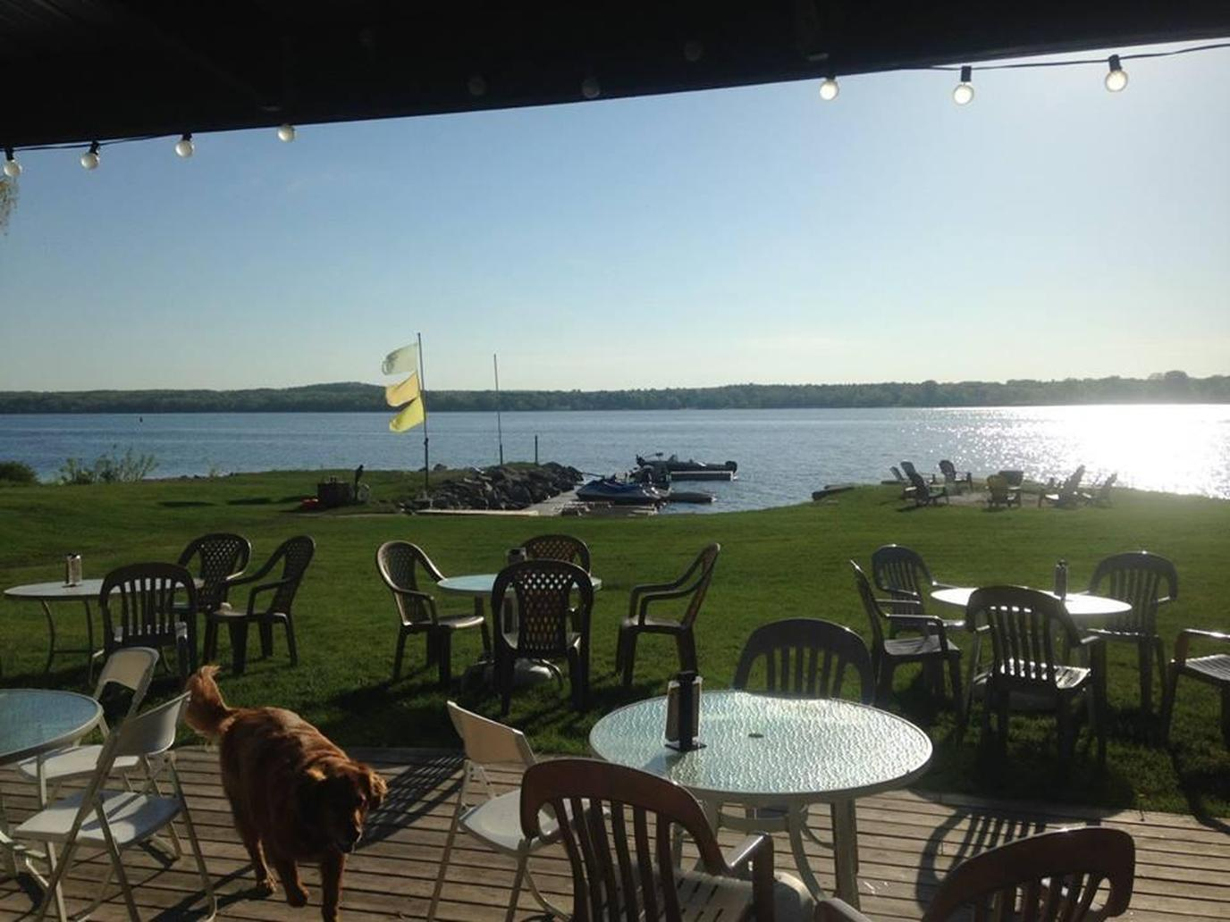 Pet-friendly restaurant in Great Lakes