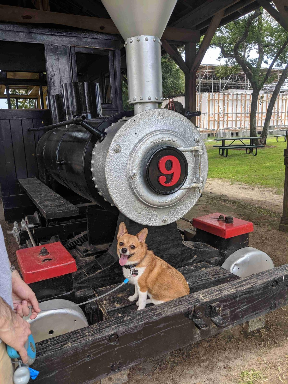 A Corgi sits in front of a train at the Georgia State Railroad Museum in dog-friendly Savannah.