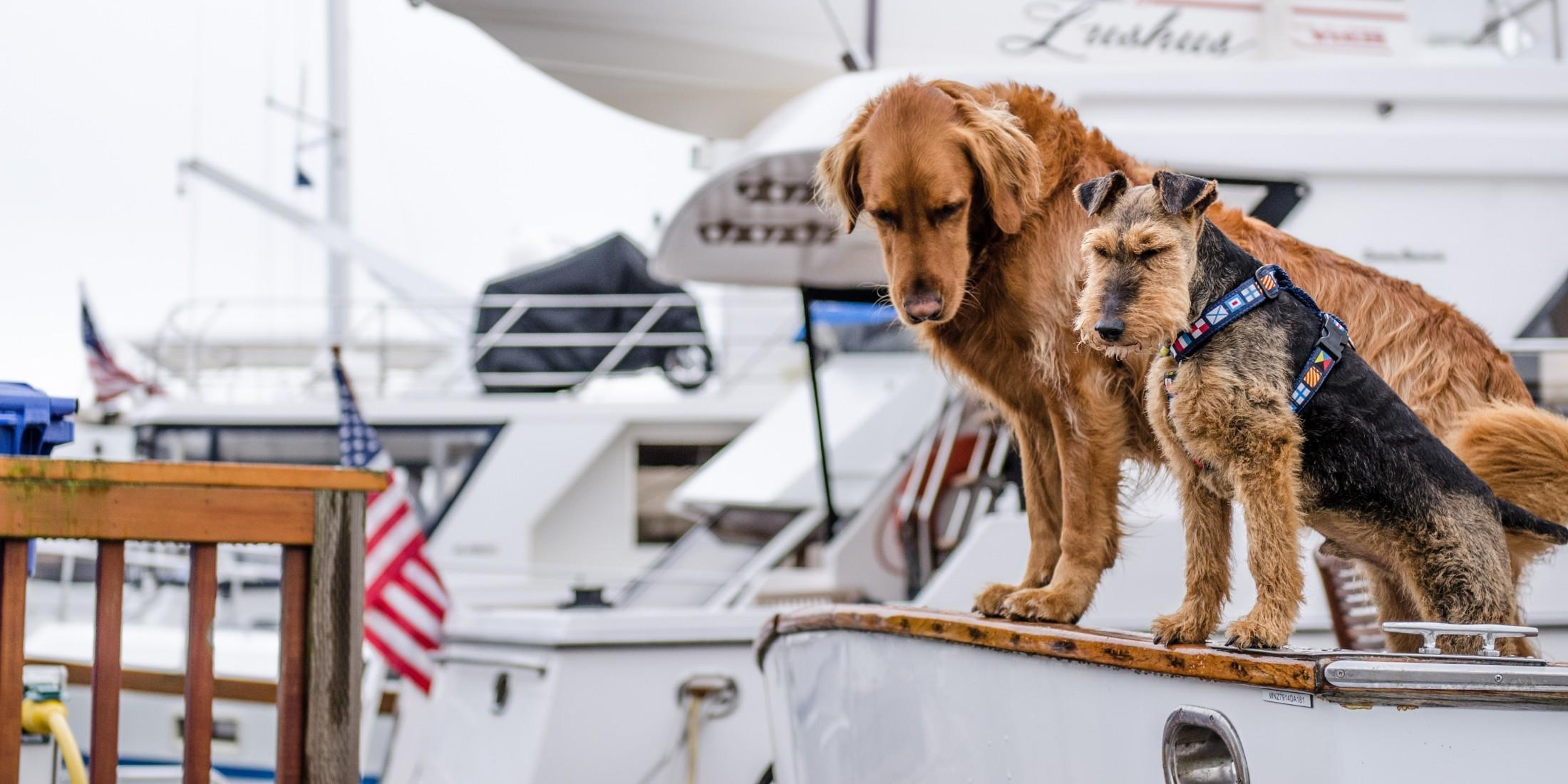 Sailing with your dog