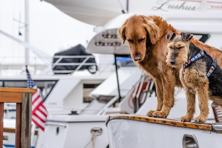 Sailing Trips to Take with Fido