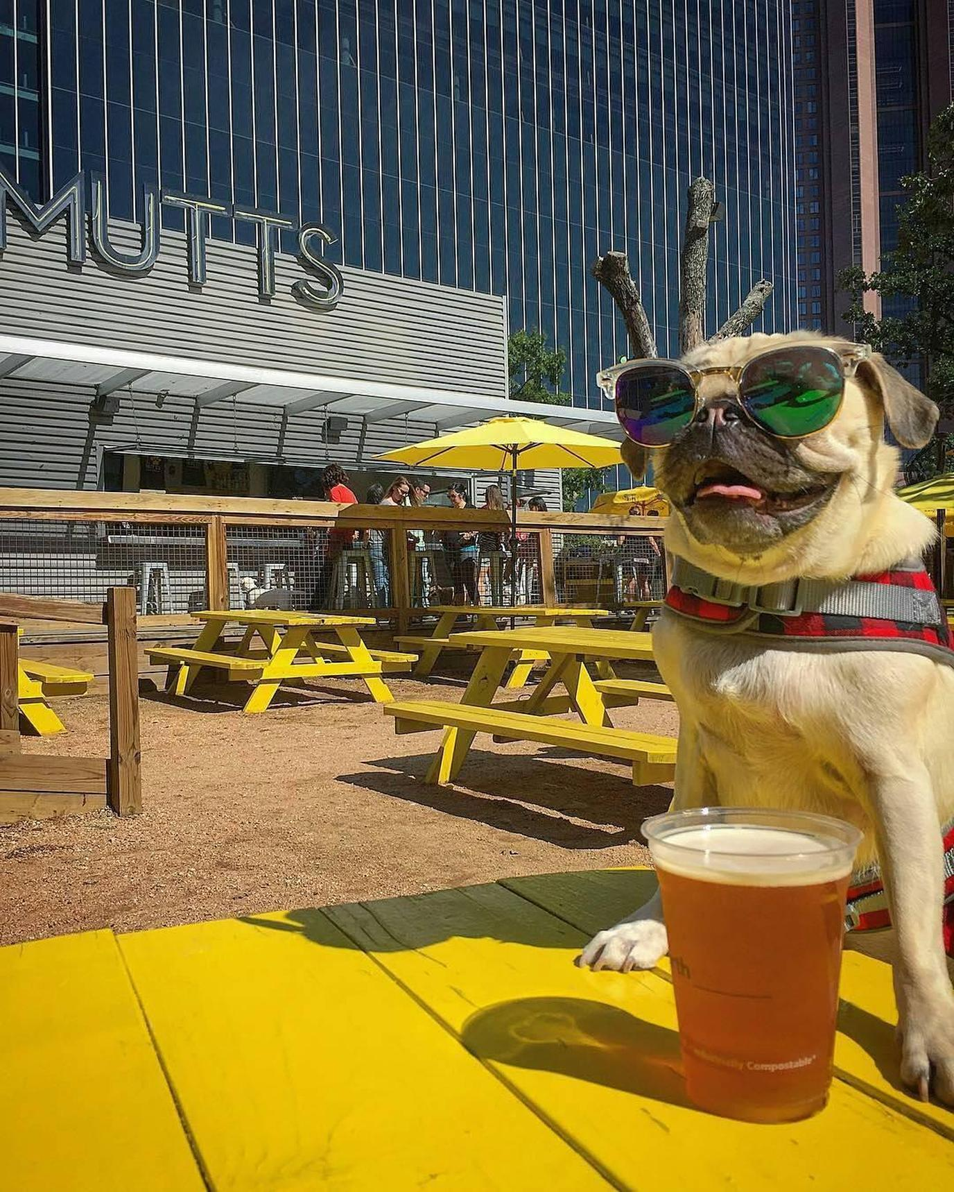 Yes, These 7 Restaurants Have Attached Dog Parks!