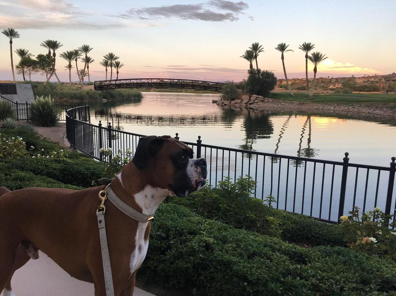 dog friendly Lake Las Vegas