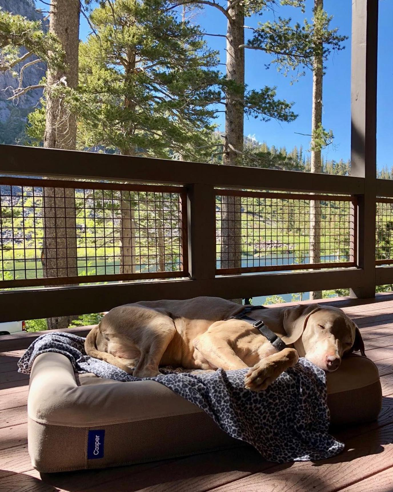 Twin Lakes at Mammoth Lakes CA is a dog-friendly destination