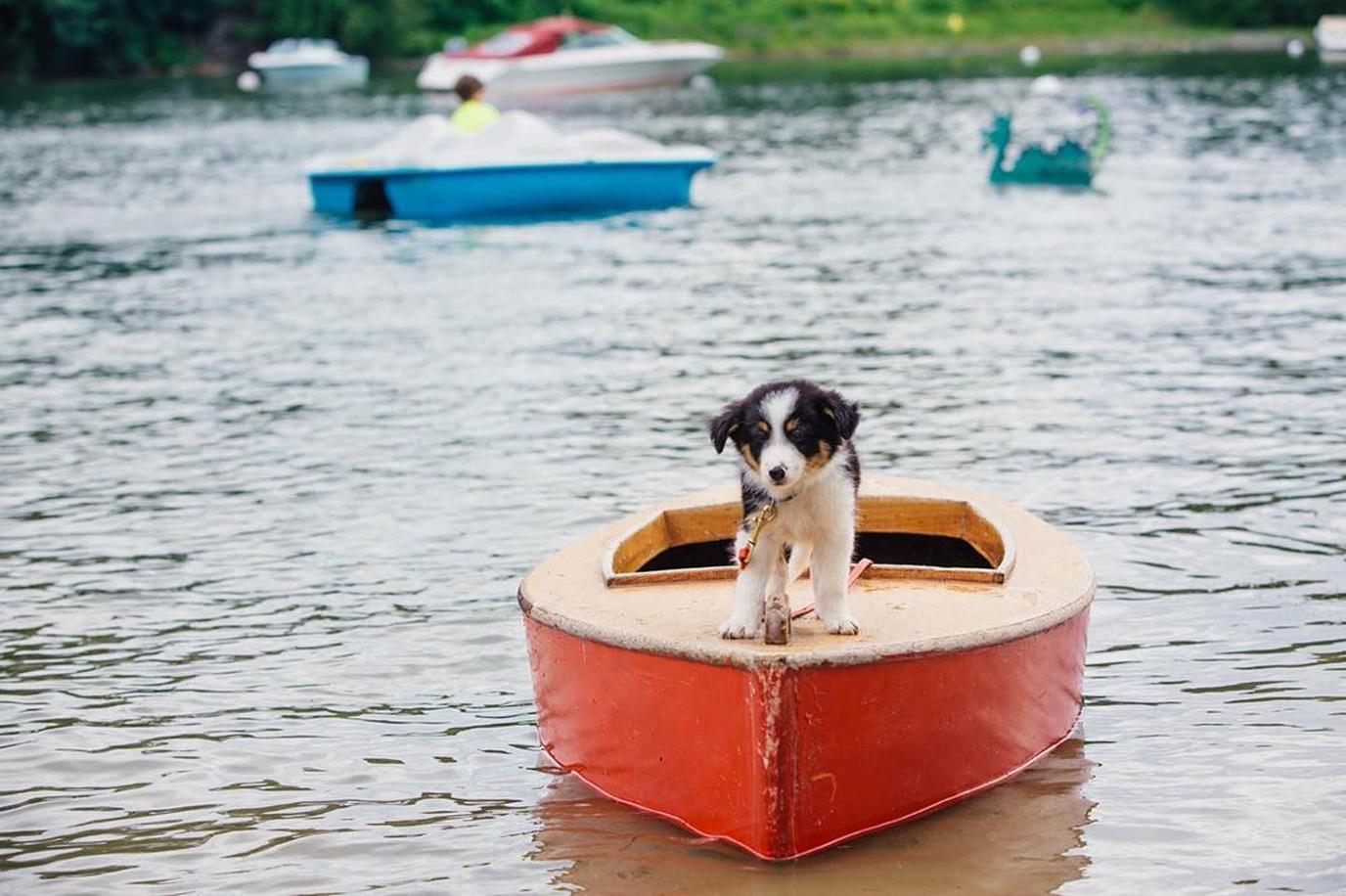 dog-friendly Lake Champlain