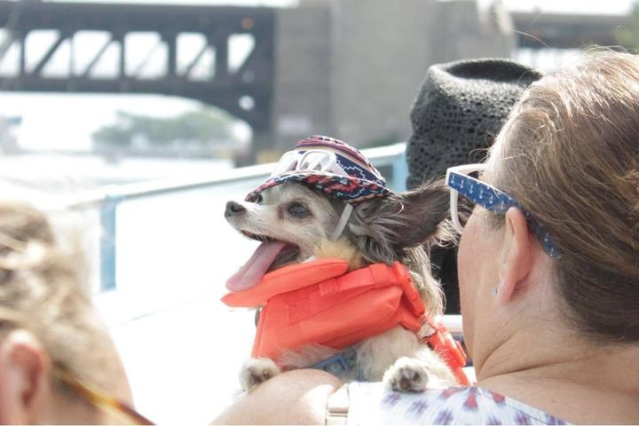 A canine cruise is just one of August's top dog-friendly events.