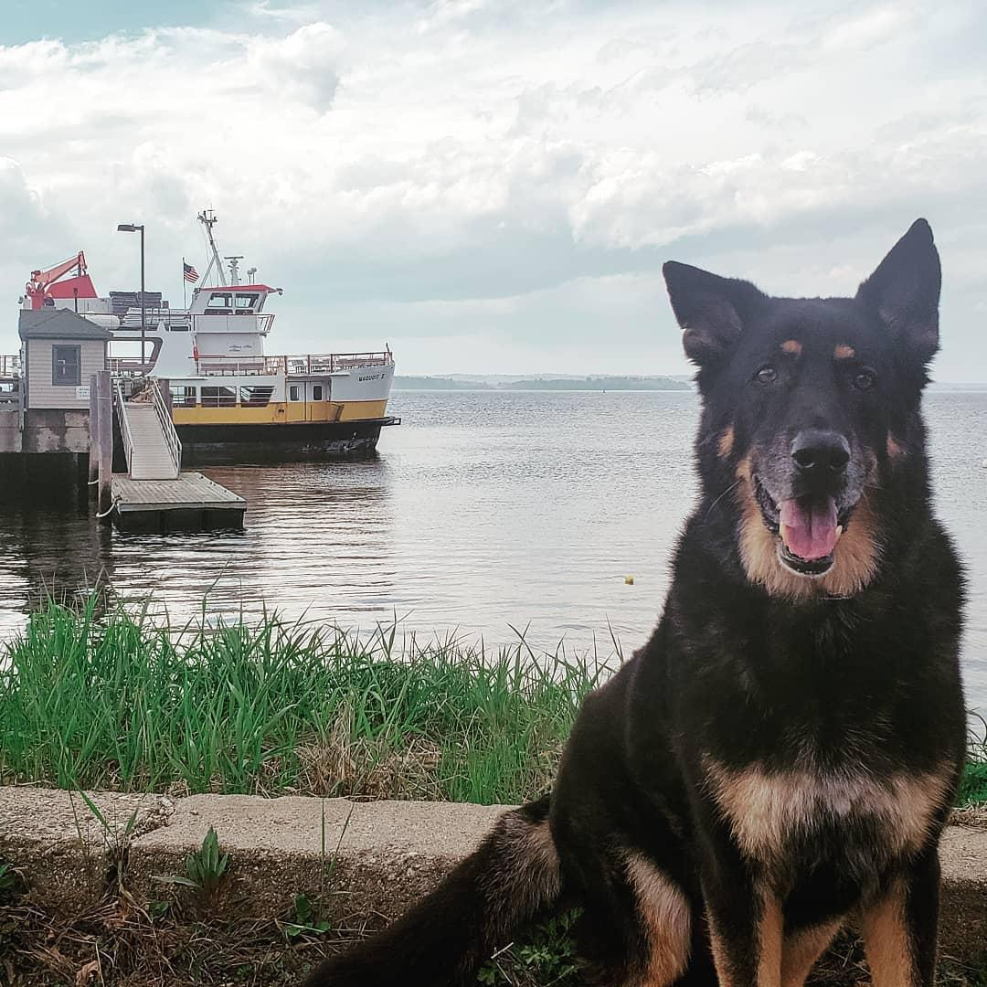 Take a pet-friendly cruise in Portland with Casco Bay Lines Ferry Terminal.