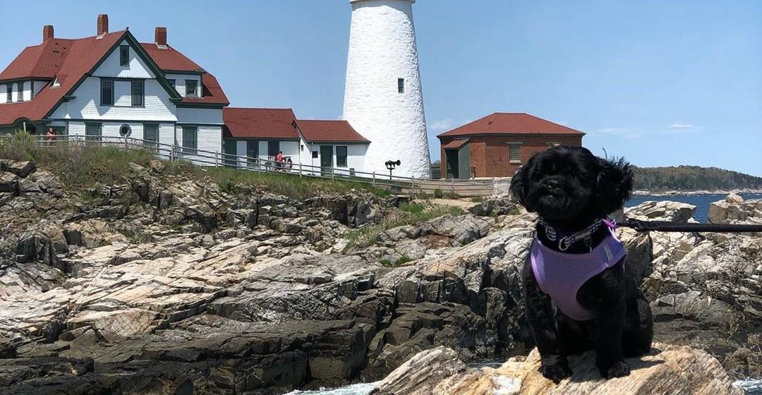 Spend a weekend in dog-friendly Portland, Maine!