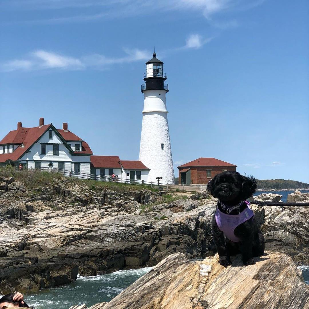 Stop by the Portland Head Light during your dog-friendly weekend in Portland.