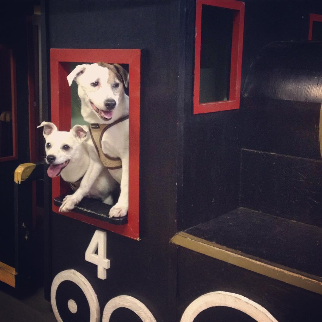 Take a dog-friendly train ride at Maine Narrow Gauge Railroad Co. & Museum.