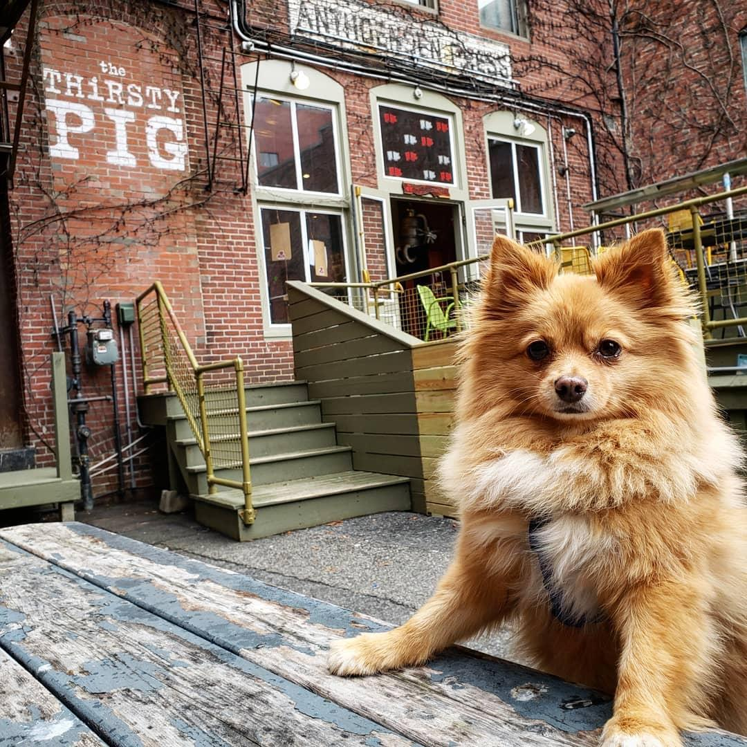 Portland has several pet-friendly breweries including The Thirsty Pig.