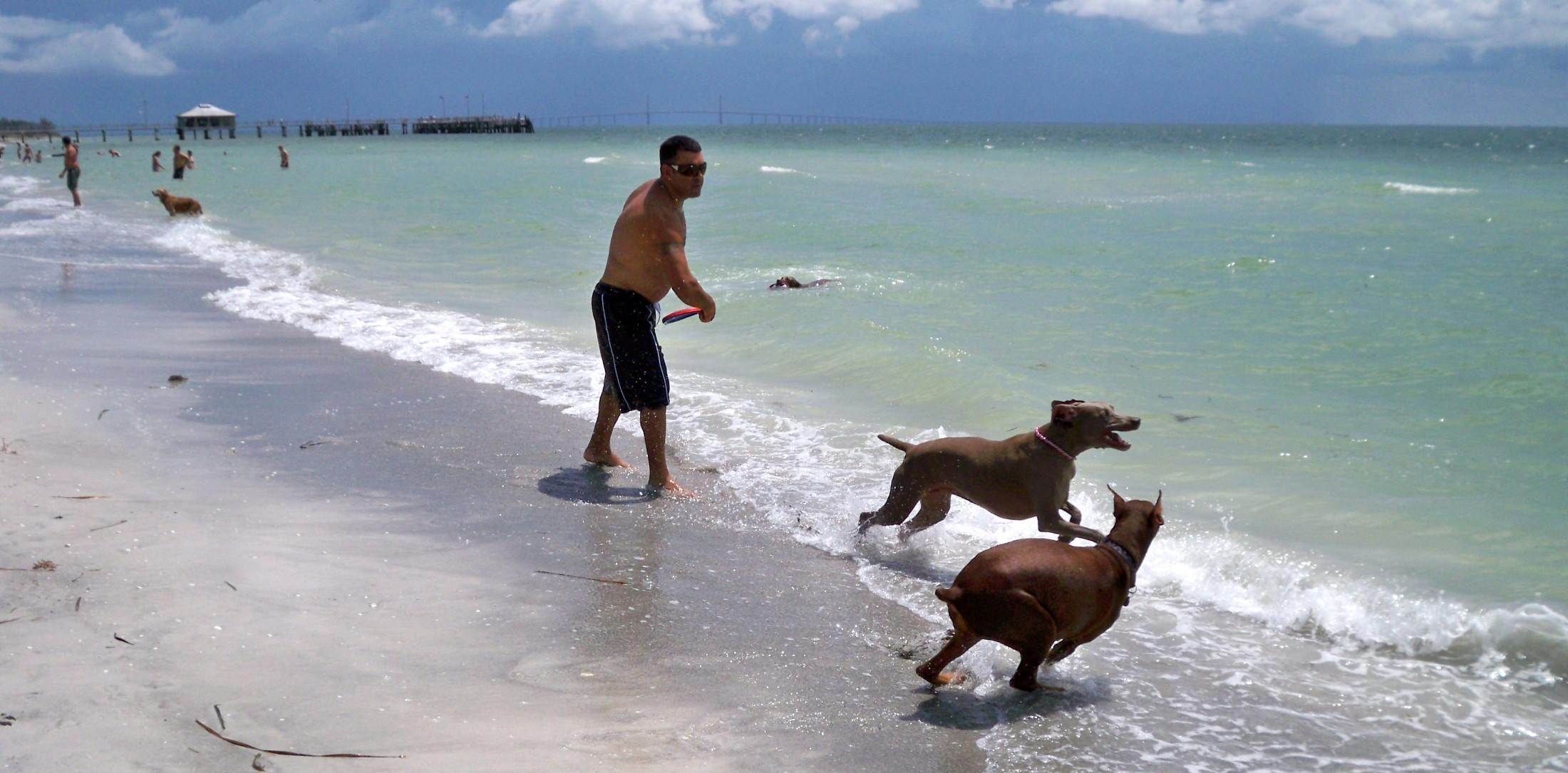 From Florida to Mexico, discover our favorite dog beaches on the Gulf Coast.