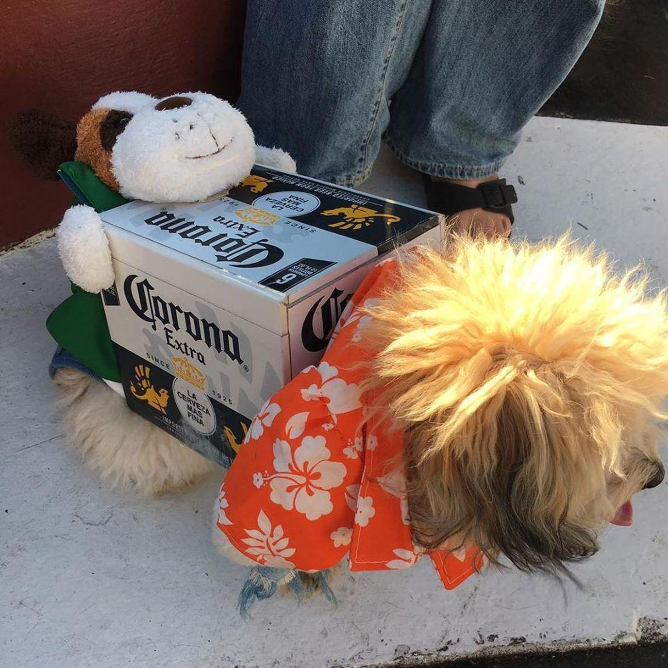 Miami's Dog Bar hosts a monthly Yappy Hour on Lincoln Road.