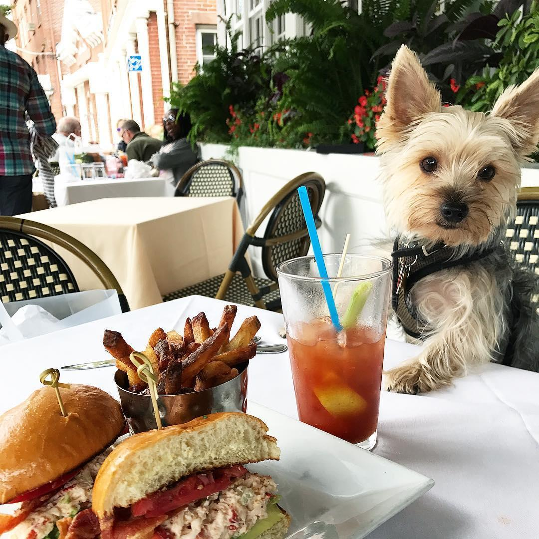 Page at 63 Main is a dog-friendly restaurant in Sag Harbor.