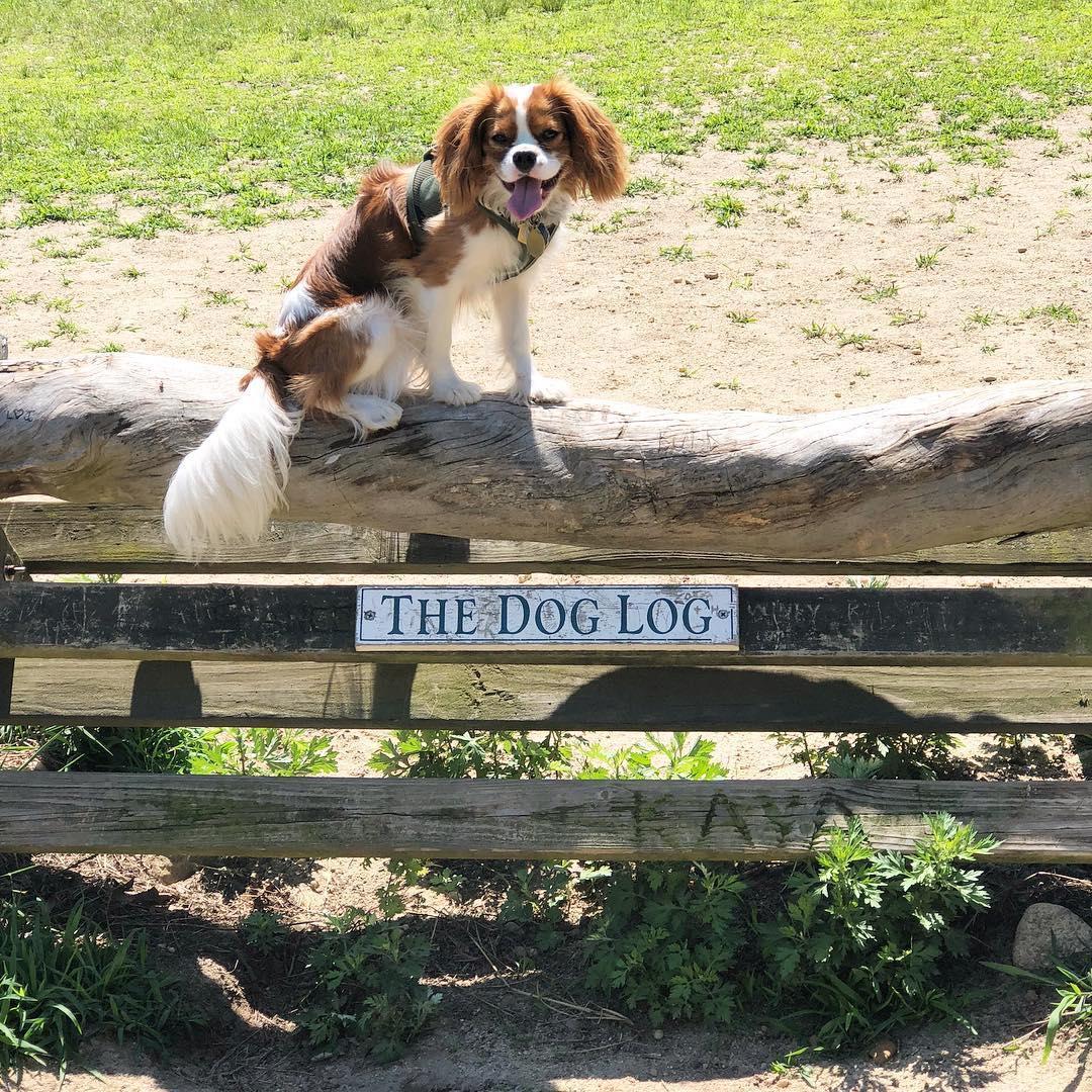 Springs Park pet-friendly dog park in the Hamptons