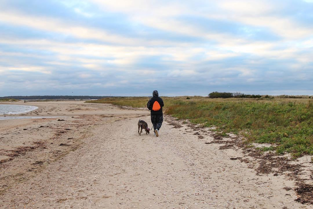 Hike with your dog at Cedar Point County Park in East Hampton.