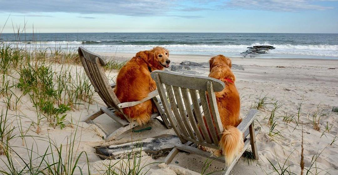 Bring Fido to the dog-friendly Hamptons for a weekend.