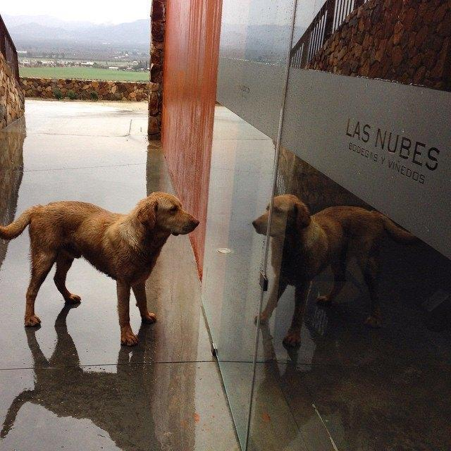 Las Nubes is a dog-friendly winery in Mexico's Valle de Guadalupe wine region.