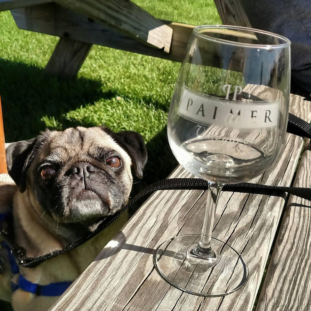 There are several dog-friendly wineries in Long Island's North Fork wine country in New York.