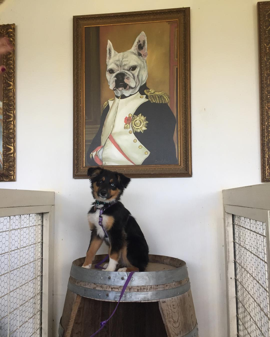 Frenchie Winery, Napa Valley's first winery for dogs, is a must-visit pet-friendly winery.