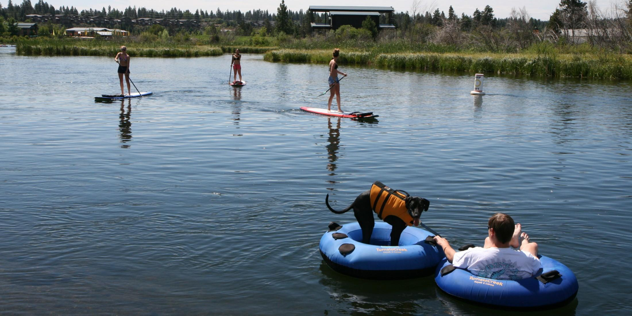 Take your dog on a pet-friendly tubing adventure.